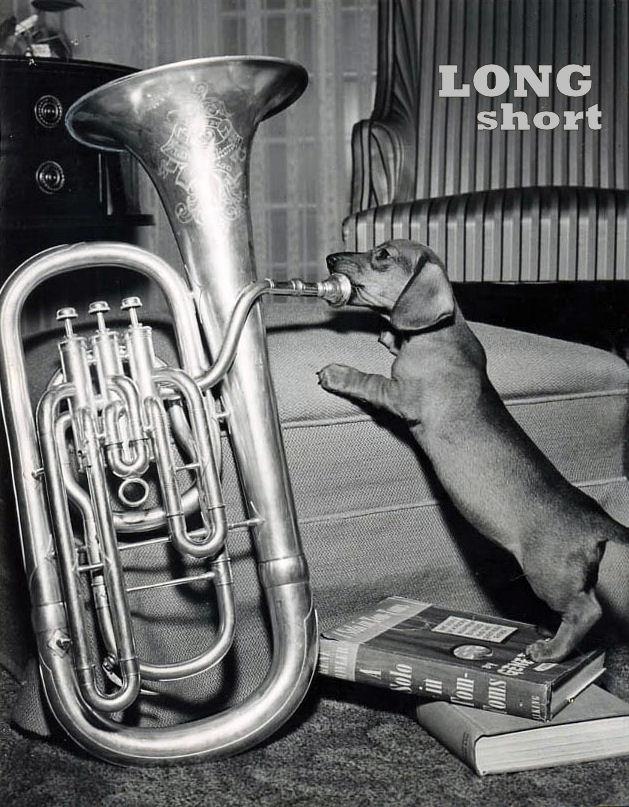 dachshund_o